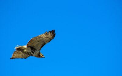 Een of andere vogel
